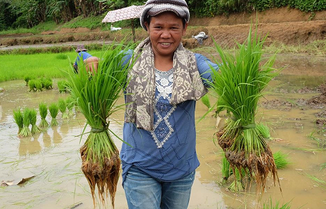 Co-creating value: The organic rice farming communities in Iloilo